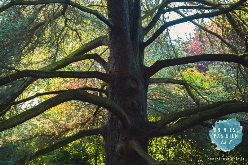 arbre parc barbieux