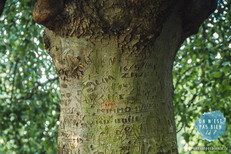 flore arbre grave parc barbieux